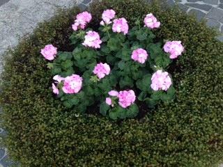 ガーデンプレイス花壇2