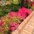 恵比寿のマナブ整体院 周辺散歩。またまた、お花のはなし