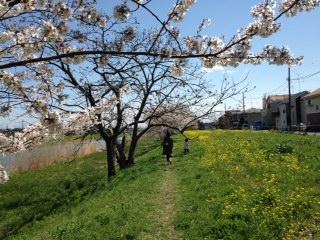 桜元荒川1