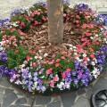 恵比寿で癒されます。春のお花