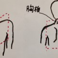 慢性の 肩こり 解消法。S字に歪んだ背骨をなんとかしましょう。