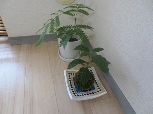 観葉植物1409042