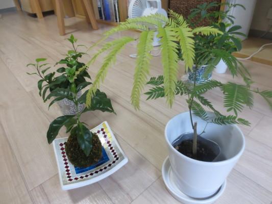 観葉植物141015