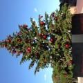 恵比寿はクリスマスツリーと青空