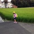 稲と緑と夕日。