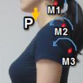 肩こりは背骨と仙骨の一体化。健康気功のポイントです。