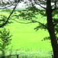 やっぱり、子供は自然が大好き。木々の緑、空の青さ、雲の白さ。