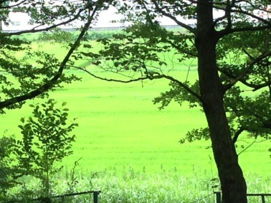 160726公園緑