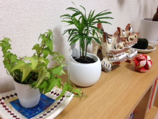 160811観葉植物2