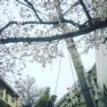 絶景100選、桜が五分咲きの坂道