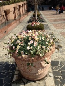 gaプレイス 花壇