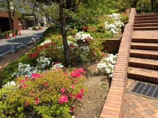 アメリカ公園橋花壇1