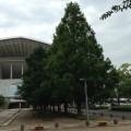 埼玉スタジアムの公園、ミストシャワー行きました。