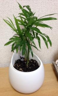 160811観葉植物